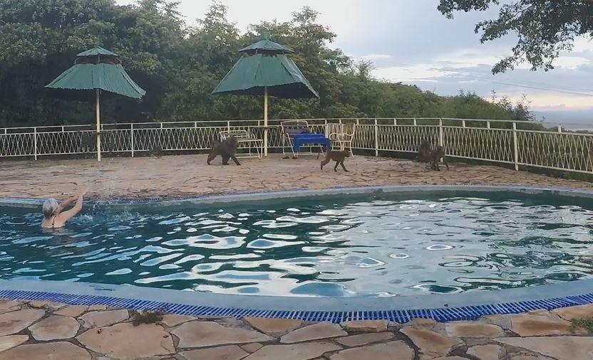 Park Tarangire a blízké setkání s opičími vládci a slony