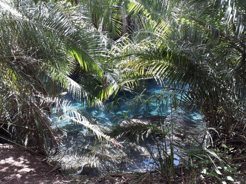 Hot Springs a poslední dobrodružství na safari