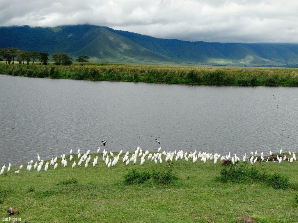 Kráter Ngorongoro a útok orla na náš oběd