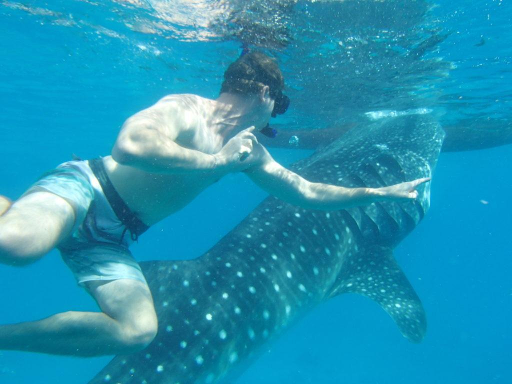 Potápění s velrybími žraloky